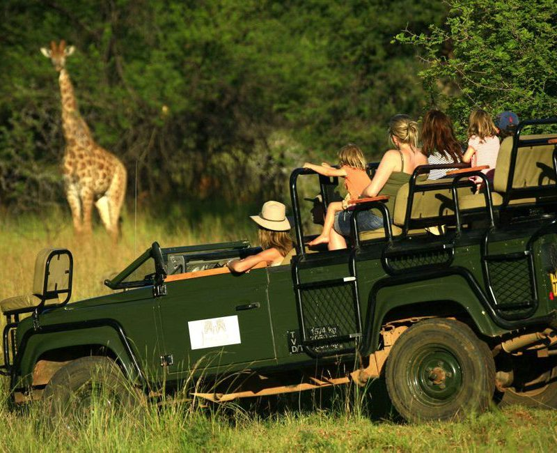 game drive with giraffes
